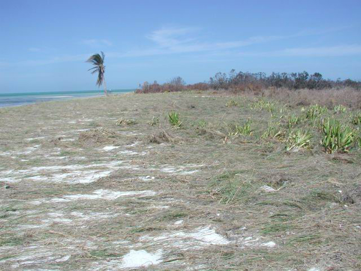 Dry vegetation flattened by water lays upland of a sandy beach.
